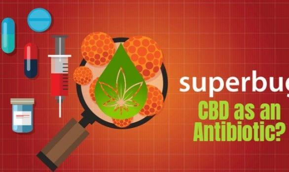 CBD researched for effectiveness as Superbug Antibiotic | Catnip Bill