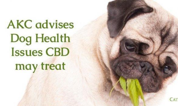 Dog Health issues CBD may treat