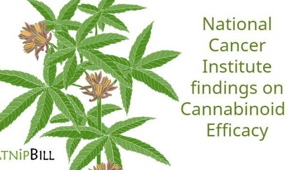 National Cancer Institute findings on Cannabinoids Efficacy | Catnip Bill